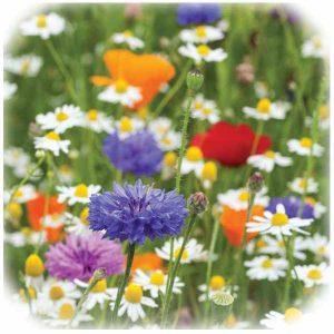 Wild Flower Seeds